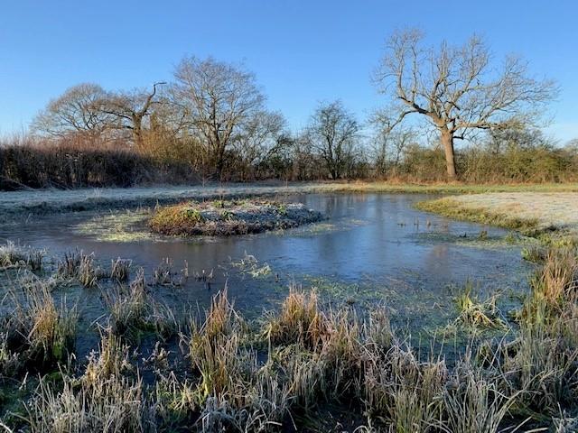 Winter pond 1