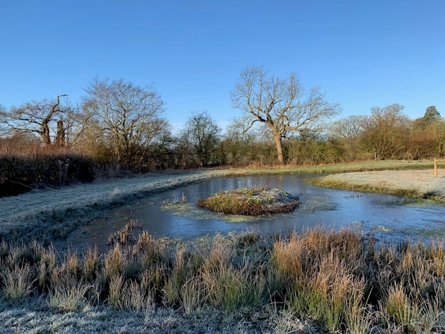 winter pond 2